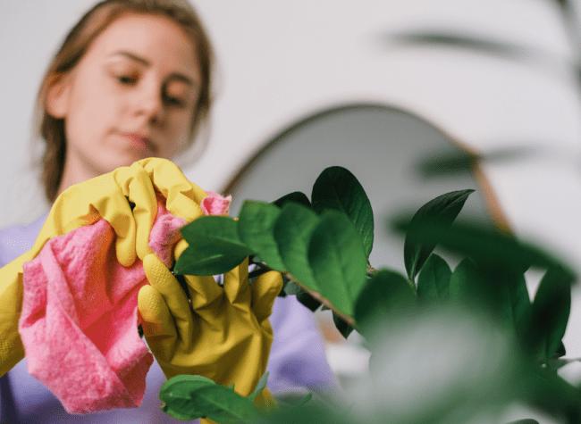 Jak pielęgnować zamiokulkas