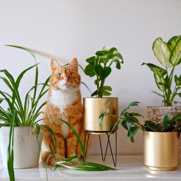 rośliny niewymagające