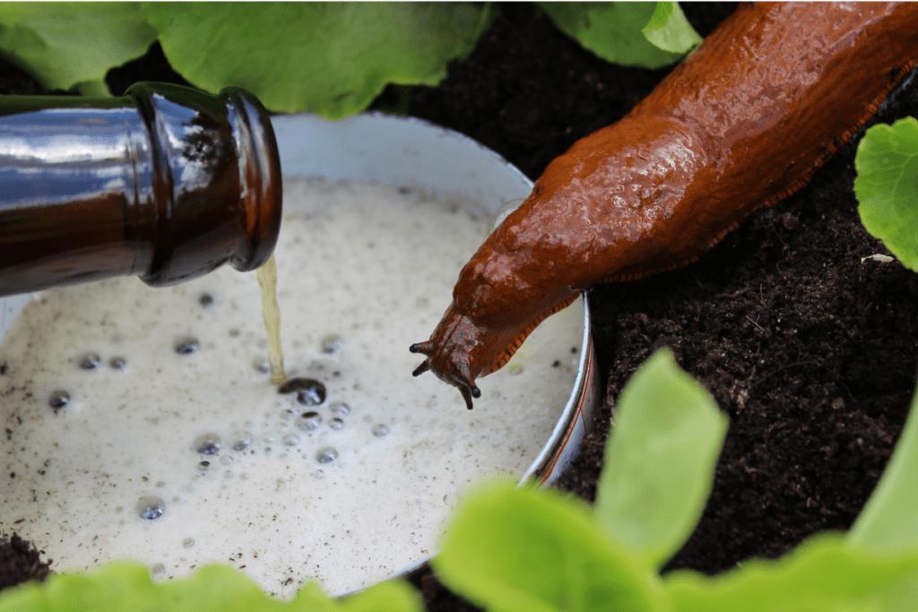 Preparaty na ślimaki