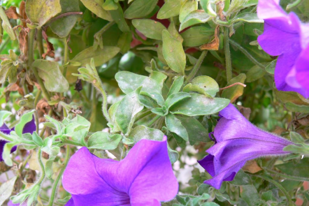Choroby rośliny
