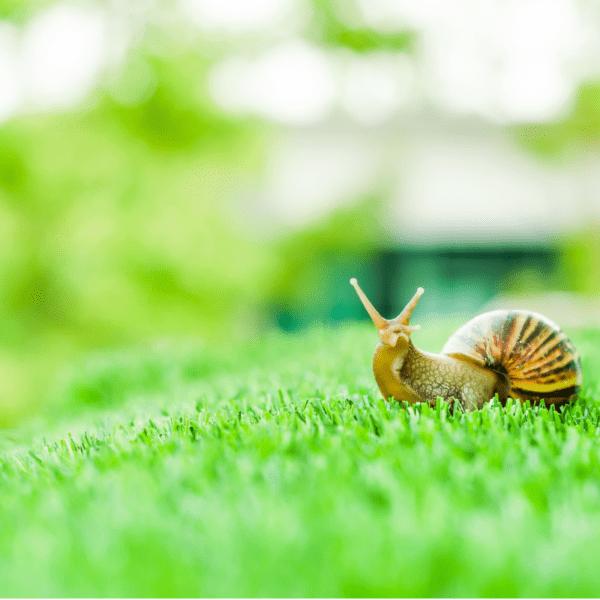 Ślimaki w ogrodzie